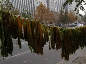 Hanging Kale 2